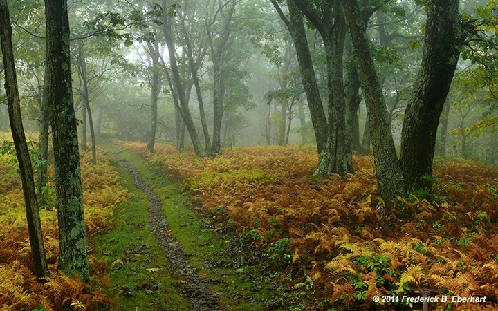 on hogback in a cloud captured on the appalachian trail in late september