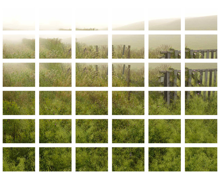 thumbnails of the 4mp photos stitched to create bluebirds remembrance