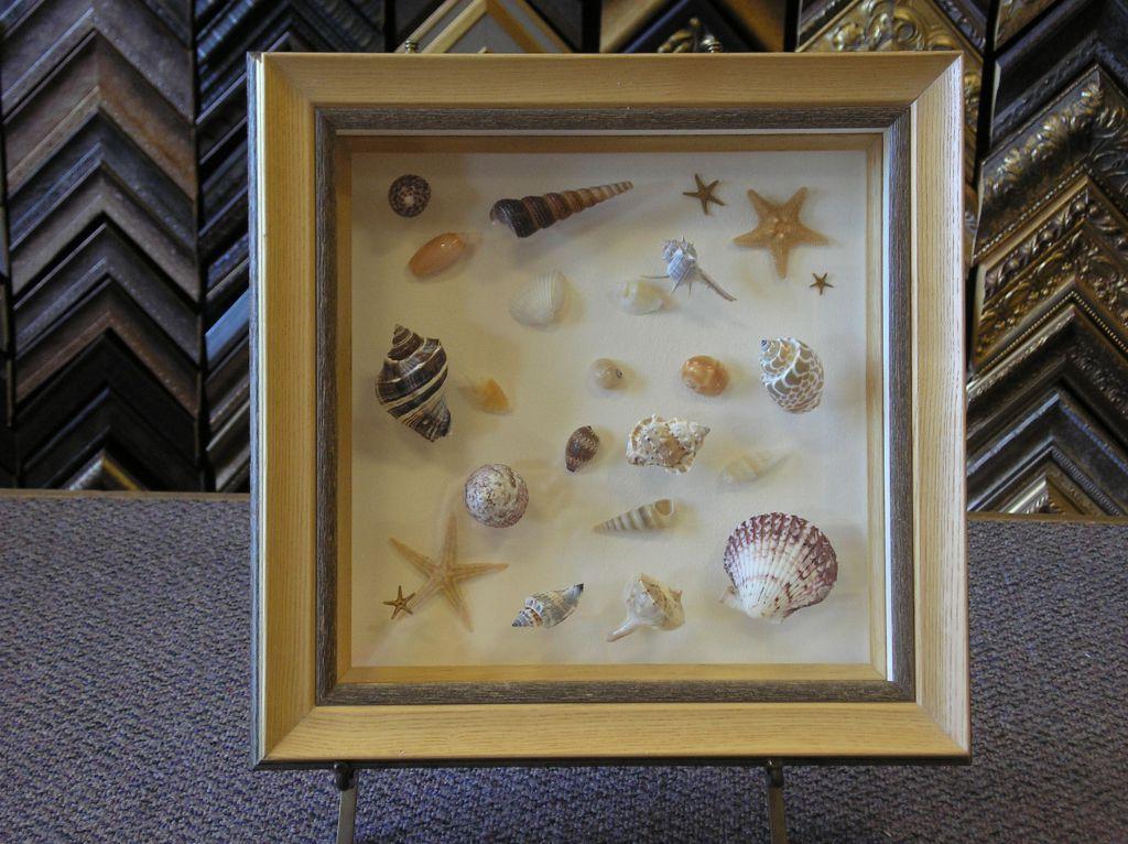seashells head on view