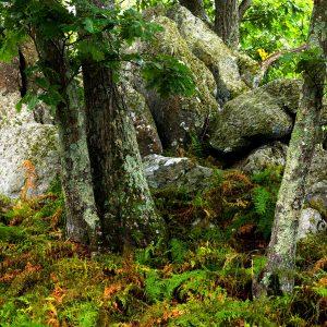 Fred Eberhart, Blue Ridge Rock Garden, digital photograph