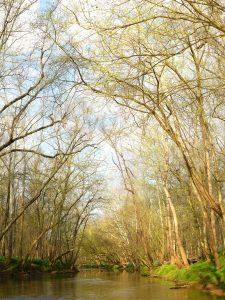 Fred Eberhart, Cedar Run, Early Spring, digital photograph