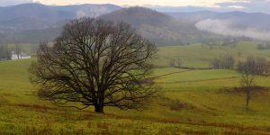Fred Eberhart, Oak's Dominion, digital photograph