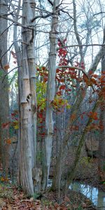 Fred Eberhart, Old Cedar, Young Oak, digital photograph