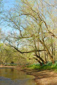 Fred Eberhart, Rites of Spring on Cedar Run, digital photograph