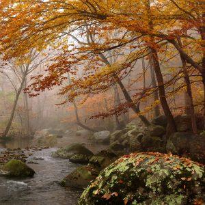Fred Eberhart, Robinson River Elms, digital photograph