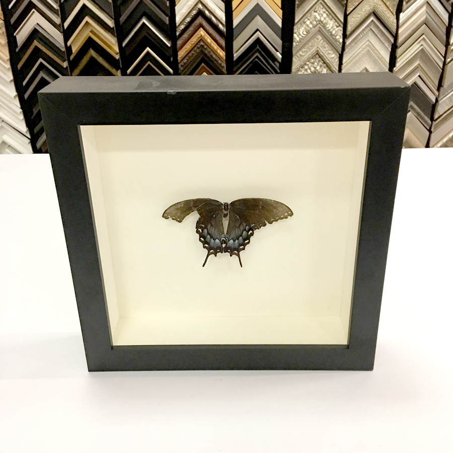 Preserved Butterfly