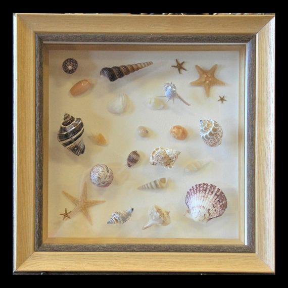 Layered Seashell Collection